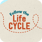 Follow the Life Cycle
