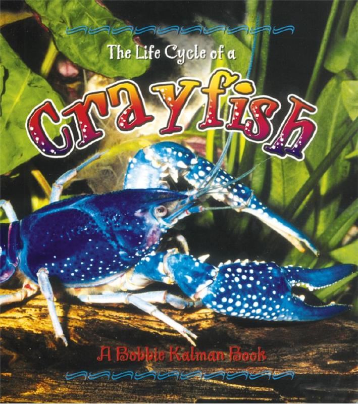 The Life Cycle of a Crayfish - PB