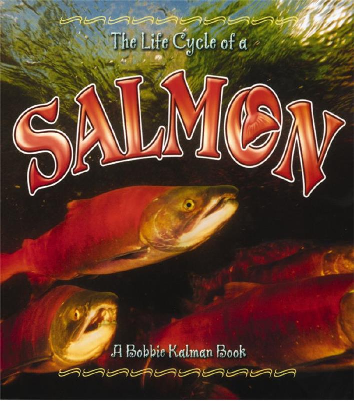 The Life Cycle of a Salmon - PB