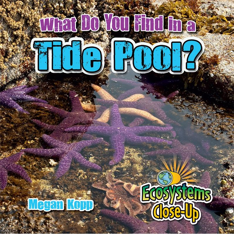 What Do You Find in a Tide Pool? - HC
