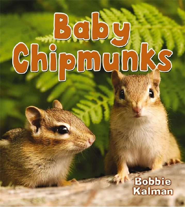 Baby Chipmunks - HC
