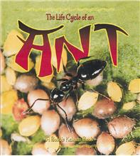 The Life Cycle of an Ant - HC