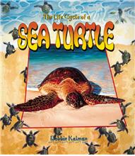 The Life Cycle of a Sea Turtle - PB