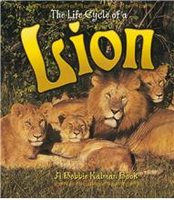 The Life Cycle of a Lion - PB
