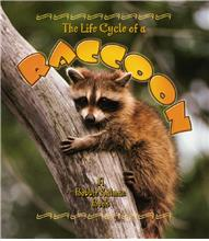 The Life Cycle of a Raccoon - PB
