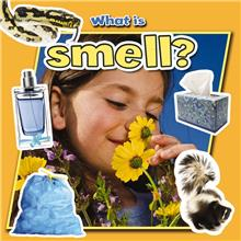 What is smell? - PB