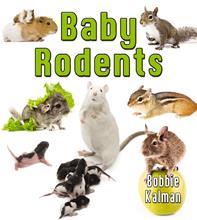 Baby Rodents - HC