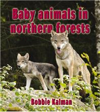 Baby animals in northern forests - PB