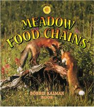 Meadow Food Chains - PB