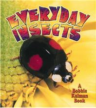 Everyday Insects - HC