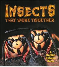 Insects that work together - PB
