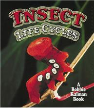 Insect Life Cycles - PB