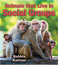 Animals that Live in Social Groups - HC