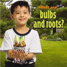 What are bulbs and roots? - HC