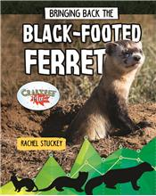 Bringing Back the Black-Footed Ferret - HC