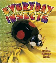 Everyday Insects - eBook