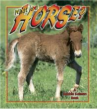What is a Horse?-ebook