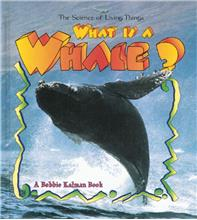 What is a Whale? - PB