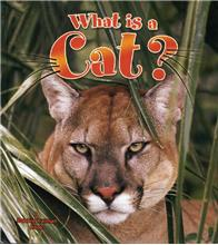 What is a Cat? - PB
